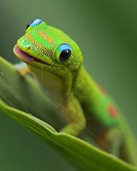 Lizard - Flickr by Konaboy